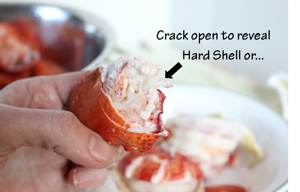 Hard-Shell-Lobster-Claw