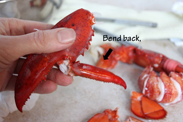 Lobster-Claw